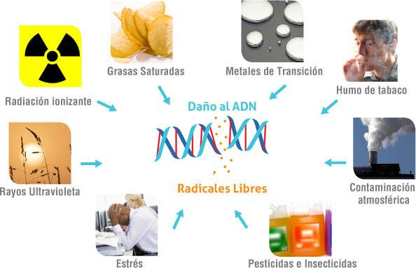 Factores que aceleran el envejecimiento y enfermedades