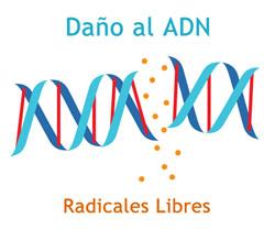 Radicales libres y antioxidantes mitocondriales