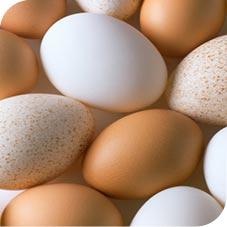 Huevo en la alimentación PALEO